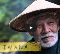 iwana-video