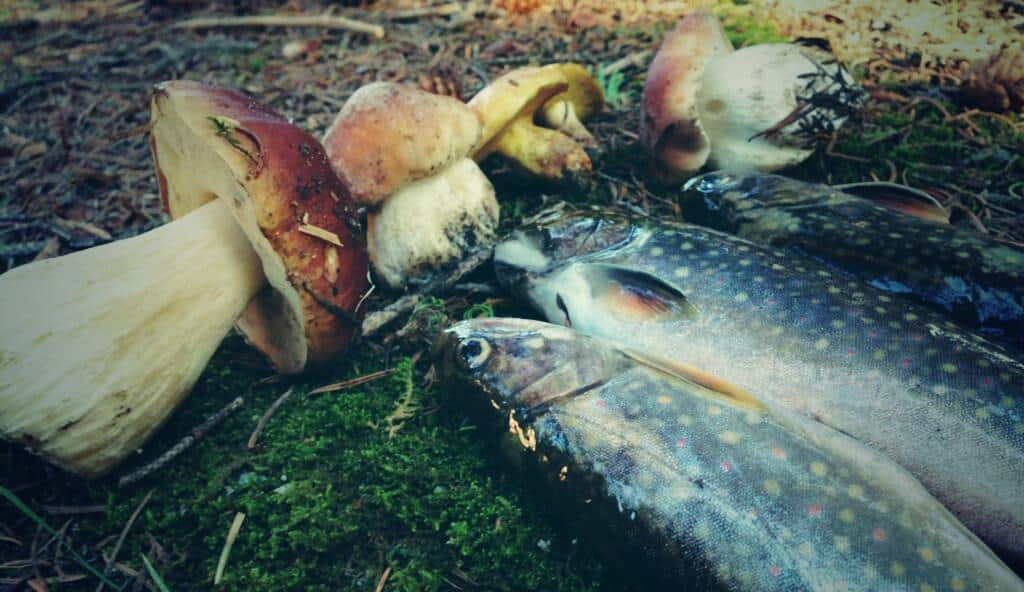 Mushrooms and trout tenkara