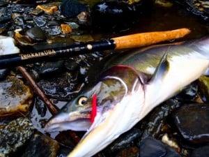 Tenkara rod Amago with pink salmon