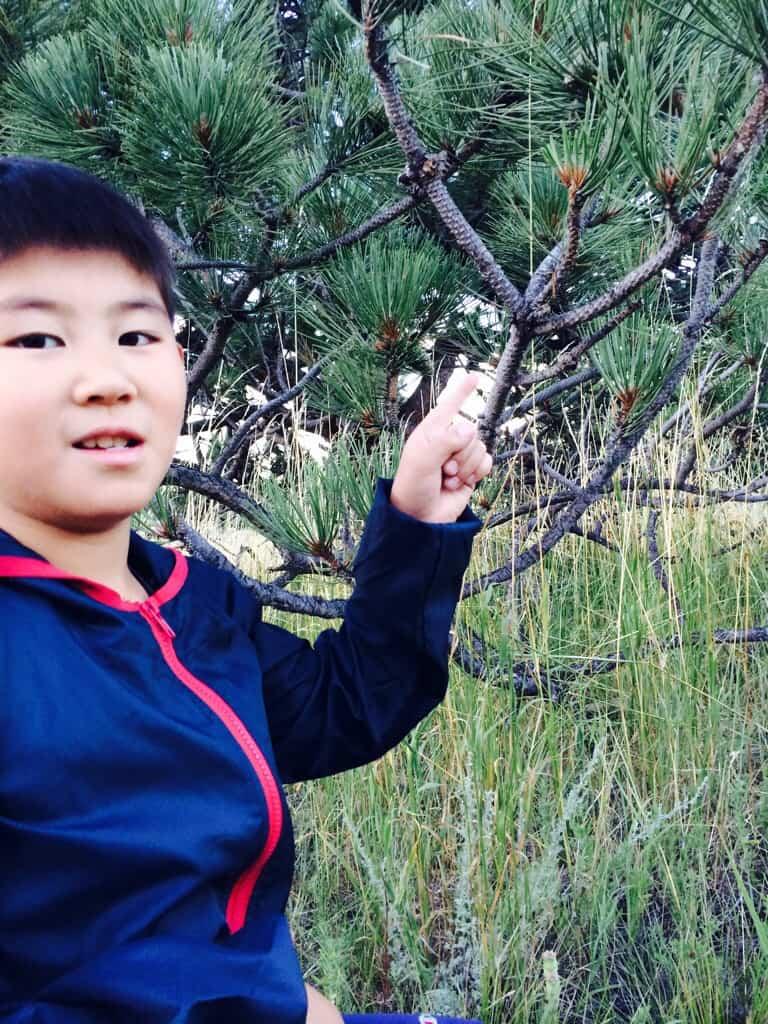 Child finding a branch to make a tenkara net
