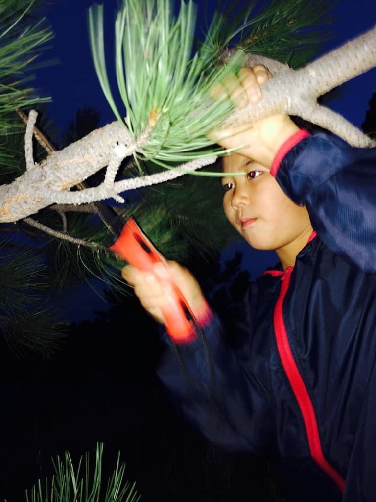 Cutting a branch for tenkara net making