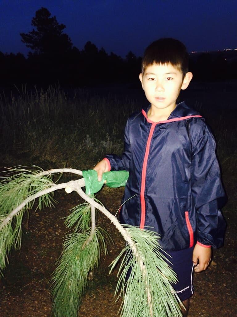 Kid taking a branch for making a tenkara net