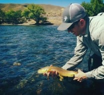Brown trout on tenkara on the Chimehuin Patagonia Argentina