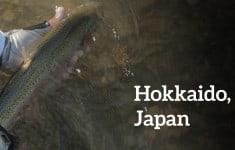 Trout fight Hokkaido with Tenkara